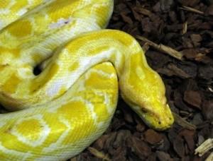 Python Serpiente - Programacion